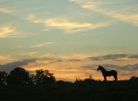 Proyecto Equustur, por el desarrollo del turismo ecuestre en Europa