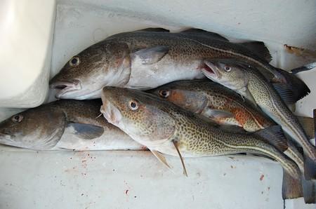 Fishing 425342 1280