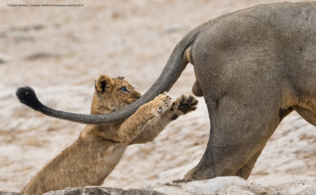 Estas son las divertidas imágenes de animales ganadoras de los Comedy Wildlife Photography Awards 2019