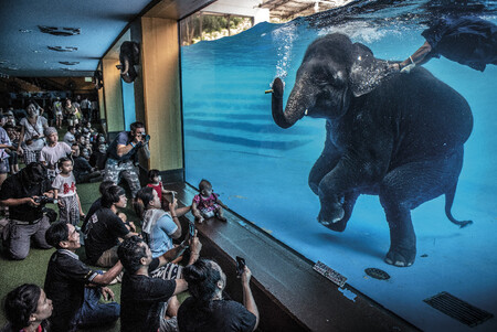 C Adam Oswell Wildlife Photographer Of The Year