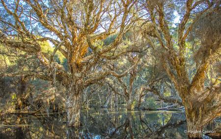 Hayden Cannon Landscape Winner