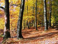 Dónde ver los colores del otoño en España