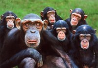 La influencia de la tecnología en el cerebro: taxistas con supermemoria, monos con pinzas-dedo y pianistas imaginarios (I)