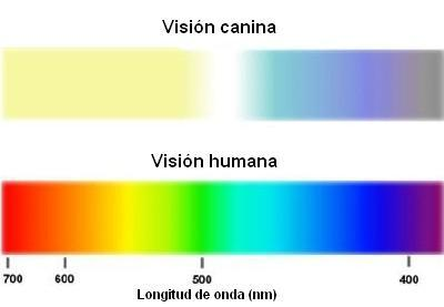 VisionPerroColores