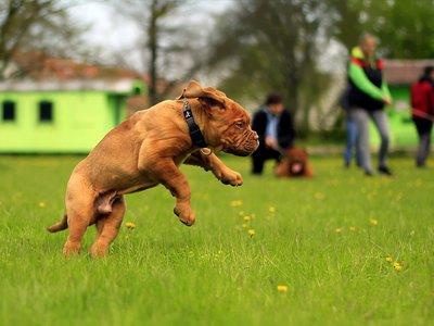 Petsonal Trainer y otras apps para mantener en forma a tu mascota