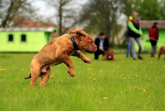 Perro creando ejercicio