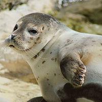 El único animal (además del Homo sapiens) que es capaz de orientarse y navegar con la ayuda de estrellas individuales