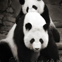 Foto 4 de 12 de la galería la-belleza-animal-en-blanco-y-negro en Xataka Foto