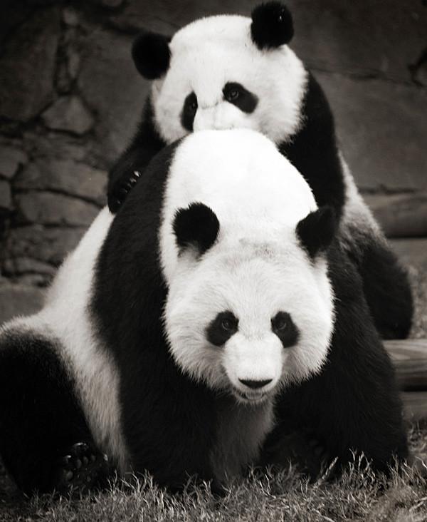 Foto de La belleza animal en Blanco y Negro (4/12)