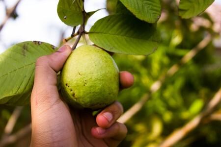 Beneficios De La Guayaba Aporta Mas Vitamina C Naranjas Limones