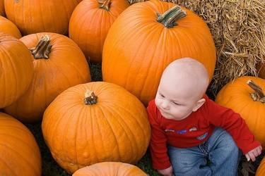 La foto de tu bebé: otoño entre calabazas gigantes