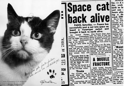 Los héroes olvidados del espacio: Félicette, el único felino que ha ido un paso más allá