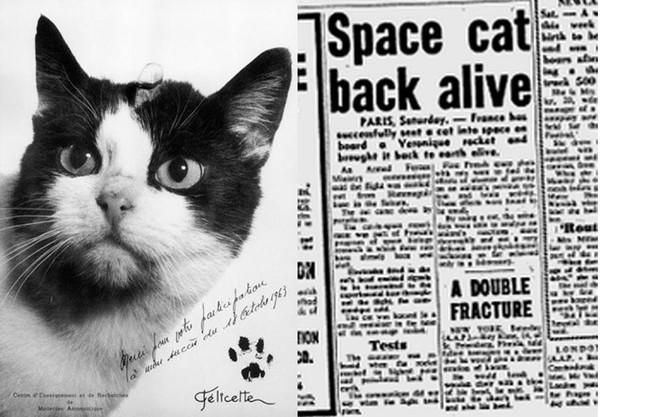 Felicette Spacecat 1024x1024