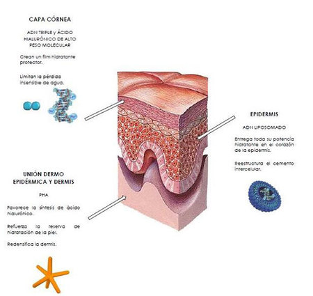 Valmont-hidratacion-tres-niveles