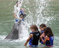 Terapia con delfines para niños autistas