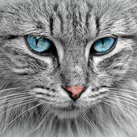 Estos gatos no existen: así funciona la creación de gatitos generados por computadora que se adueñarán de internet