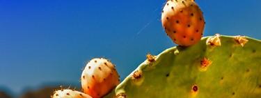 Consejos para eliminar la baba de los nopales cuando los cocines
