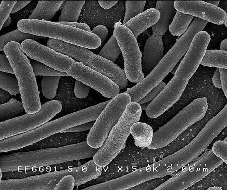 Se localizan 518 microbios desconocidos en nuestra flora intestinal