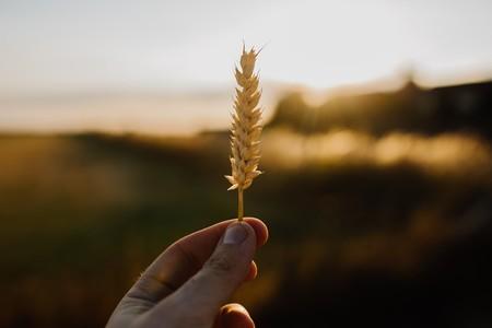 Todo lo que tienes que saber sobre el gluten y la celiaquía (aunque no seas celíaco)