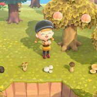 Animal Crossing: New Horizons: cómo conseguir todos los tipos de champiñones
