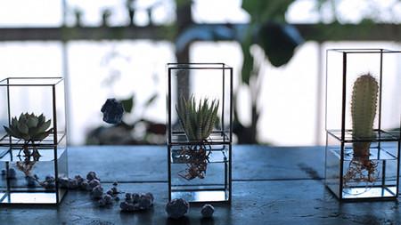 10¹² Terra, preciosos jarrones hidropónicos