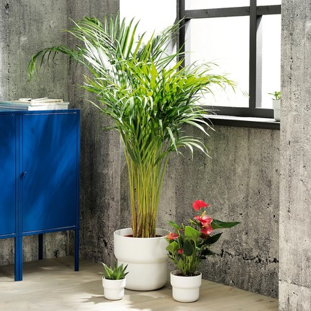 Foerenlig Plant Pot In Outdoor White 0917258 Pe785704 S5