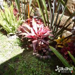 Foto 10 de 17 de la galería fotografias-con-blackberry-passport en Xataka México