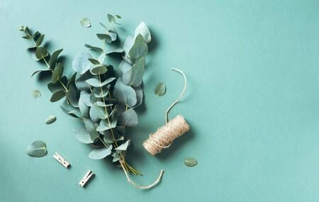 Plantas que secan bien