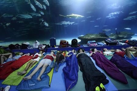 Escuela Verano Tiburones 4