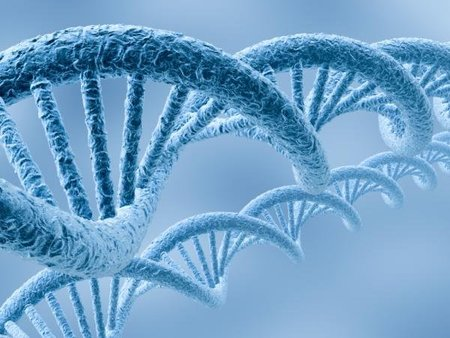 Después del genoma humano llega el metagenoma: la estructura microbiana del cuerpo humano