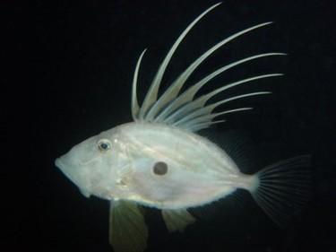 Un pez llamado San Pedro
