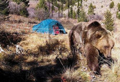 Alambrada para protegernos de los osos