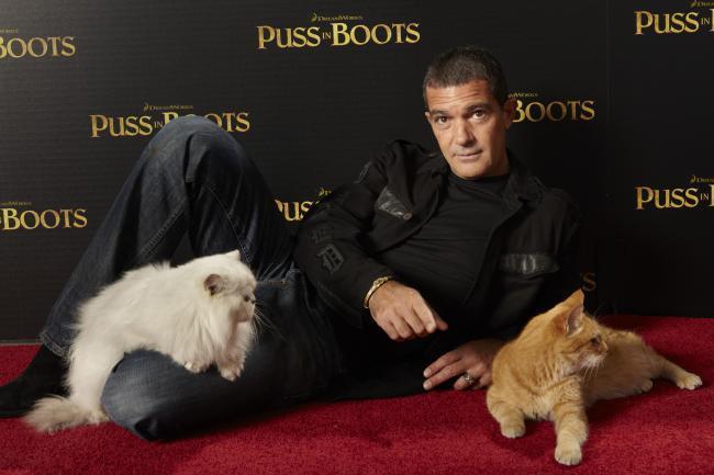 Antonio Banderas en el estreno de El Gato con Botas