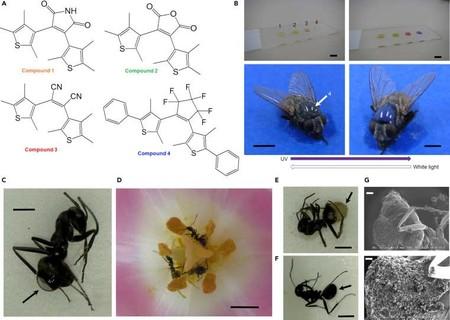Pruebas Insectos