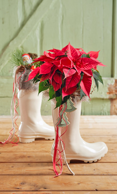 2016 Poinsettia Bota Santa Claus Es