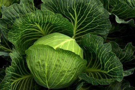 Cabbage 3722498 1280