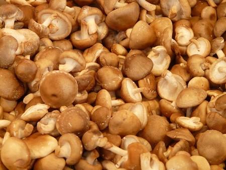 Tipos Hongos Champinones Poderosos Beneficios Curativos Fungi Shiitake