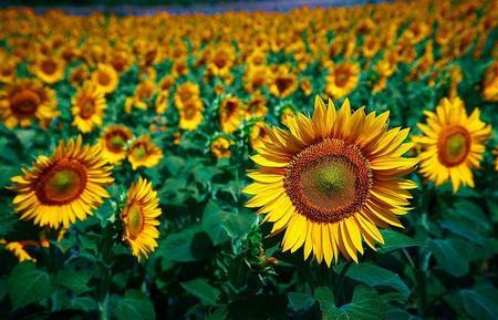 La clave en la atracción de las plantas al Sol