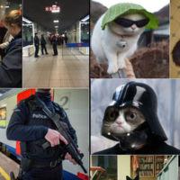 La policía belga llegó tarde: Twitter ya estaba combatiendo el terrorismo con gatitos