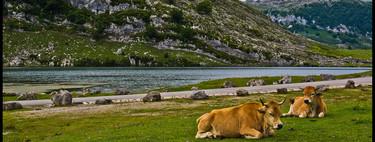 Siete rincones que me enamoraron de Asturias