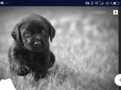 ¿Es el nuevo Snapseed el mejor editor fotográfico para Android? Prueba a fondo