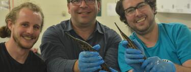 La sofisticada red de nervios que conectan los ojos con el cerebro evolucionó 100 millones de años antes de lo pensado