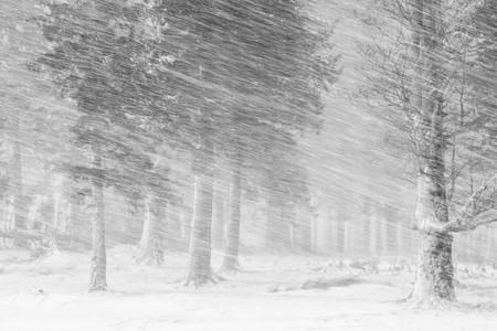Snow Cosmin Stan 3392