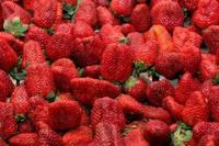 Fresas, un fruta rica y llena de beneficios