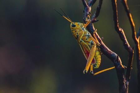 La población de insectos en la Tierra ha disminuido alrededor de un 25% en los últimos 30 años
