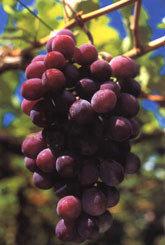 Compre una viña
