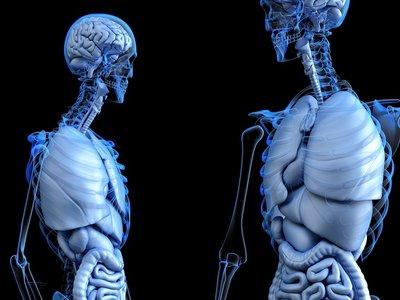 Esta cámara es capaz de ver a través de tu cuerpo para revolucionar y abaratar las endoscopias