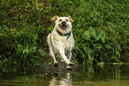 John Carelli Look Mum I Can Walk On Water