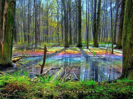Kevin Biskaborn Rainbow Forest