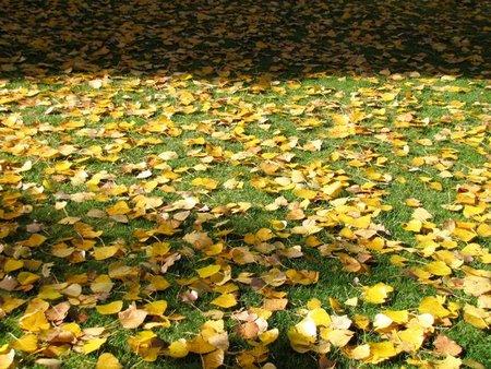 Correr en otoño, empieza el frio